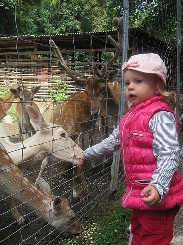 Bambis füttern